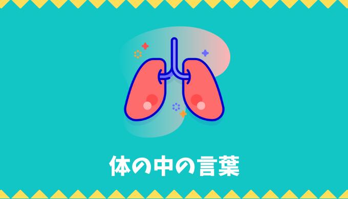 【日本語語彙】体の中(臓器・器官・骨など)の言葉リスト