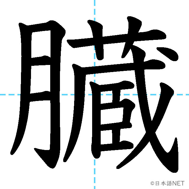 【JLPT N2漢字】「臓」の意味・読み方・書き順